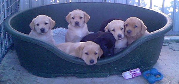 Puppy+Photo.jpg