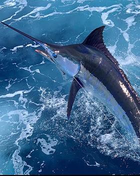 Blue Marlin 2.jpg