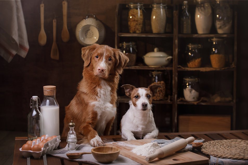 two dogs are cooking in the kitchen. Pet