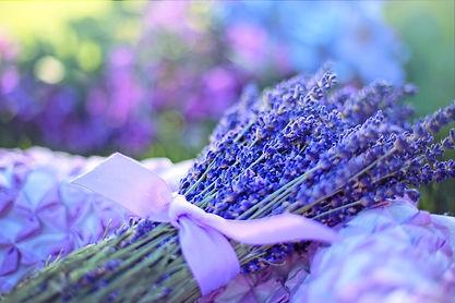 lavender-2482374_1920.jpg