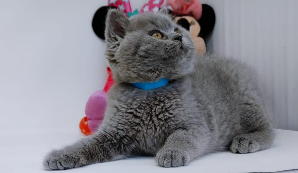 Kittens 8