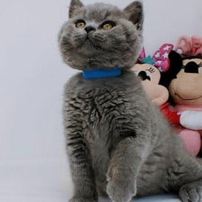 Kittens 13