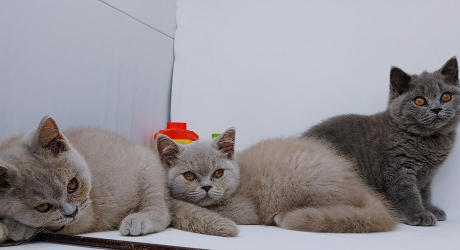 BMM Kittens