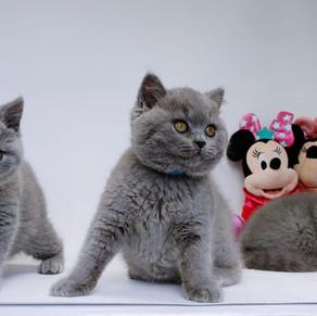 Kittens 7