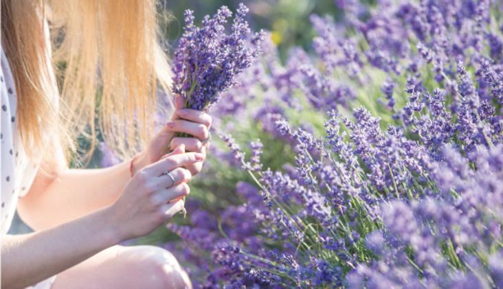 lavenderと少女.png