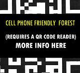 Cell Phone Friendly Forest