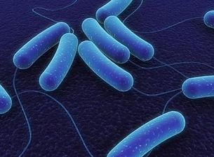 bacillus-subtilis-500x500.jpg
