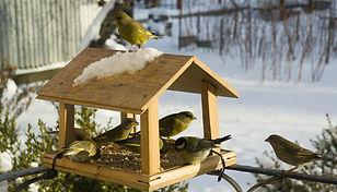 come-fare-una-mangiatoria-per-uccelli-fa