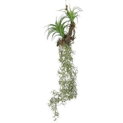 Faux hanging air ferns on branch