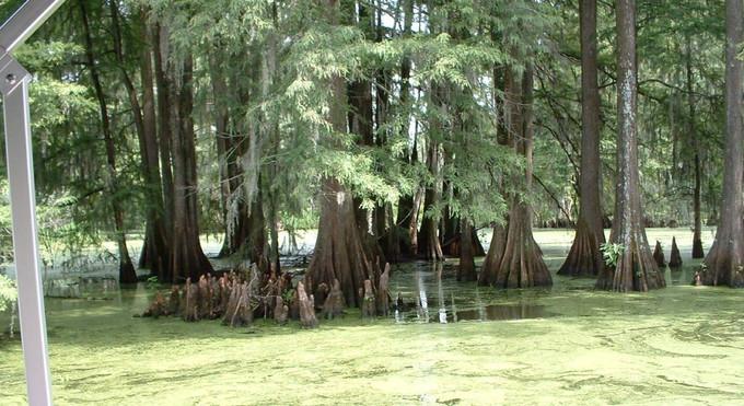 CypresSwamp.jpg
