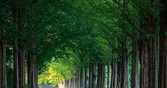 숲배경.jpg