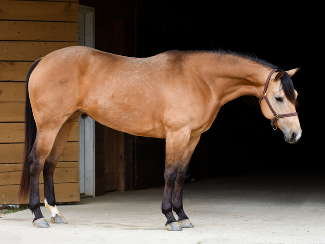 Equine Sale Ads: Do's and Dont's!