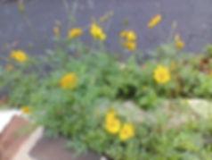 flowers breaking concrete 3.jpg
