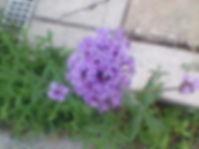flowers breaking concrete 4.jpg