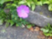 flowers breaking concrete 1.jpg