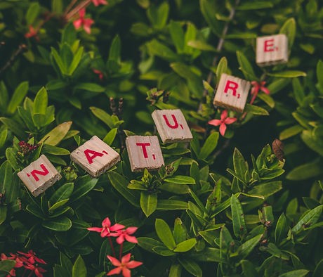 Canva - Scrabble Pieces Forming Nature Word_edited.jpg