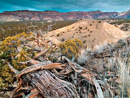 Sutton Mountain Wilderness Proposal Moves Forward (Public News Service)