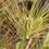 Thumbnail: 유기농 보리차(500g)