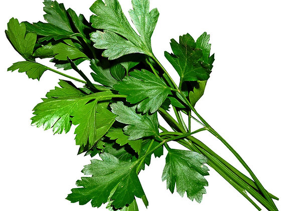 FLAT PARSLEY  ( 50G PACK )