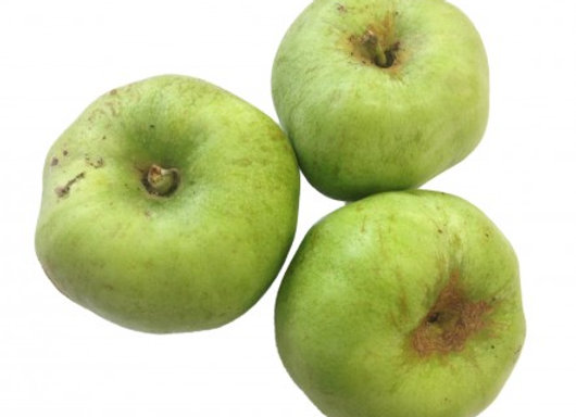 COOKING APPLE  ( 1KG )