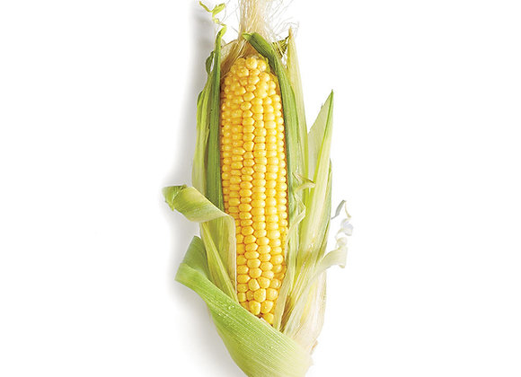 CORN ON THE COB  ( DOUBLE PACK)