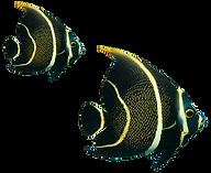 peixes.png