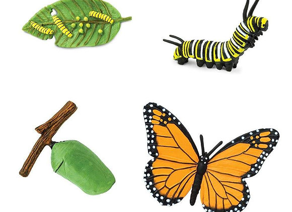 Life Cycle of a Monarch Butterfly (나비의 성장)