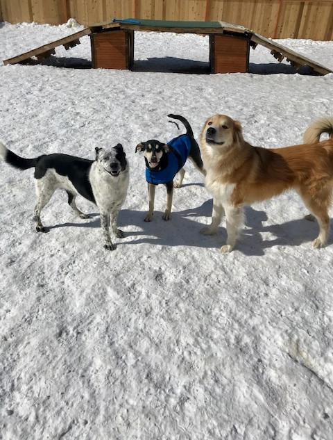 doggy daycare sage bandit bruno.jpg