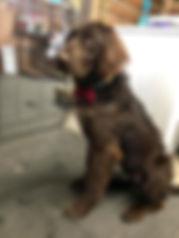 grooming24.jpg