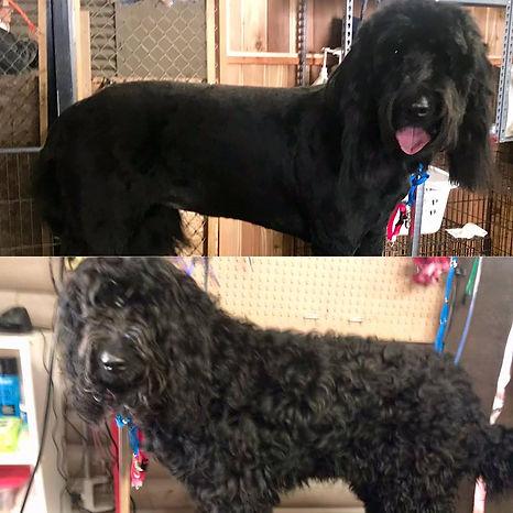 grooming21.jpg