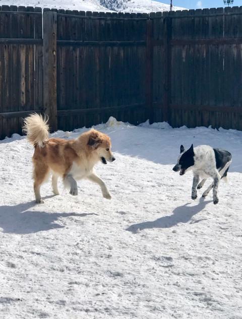 Doggy Daycare Bruno and Bandit.JPEG