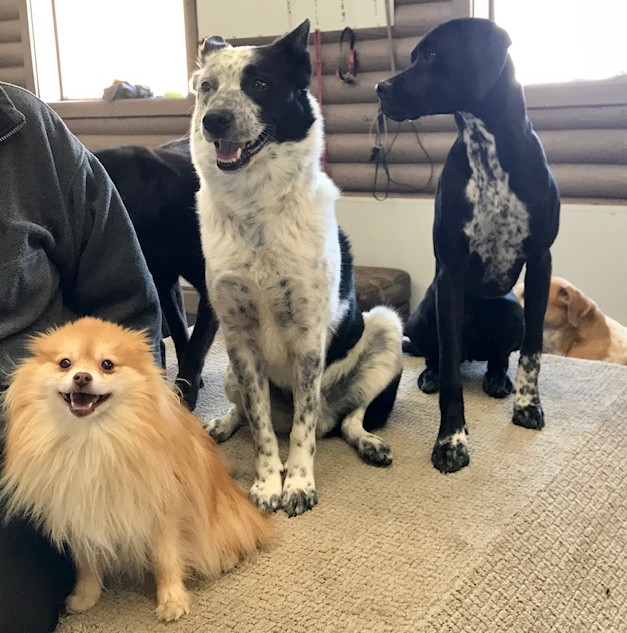doggy daycare group picture.jpg