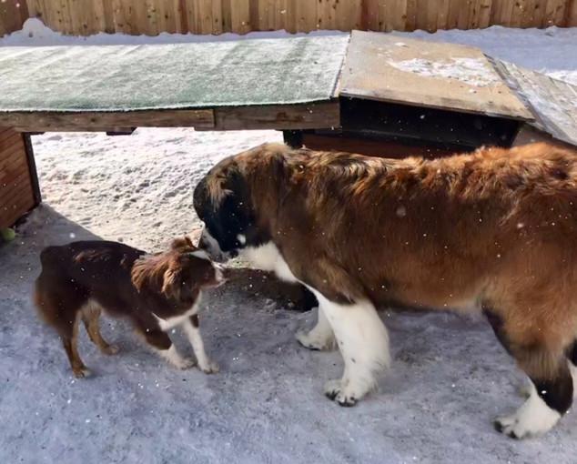 Doggy Daycare 1.JPEG