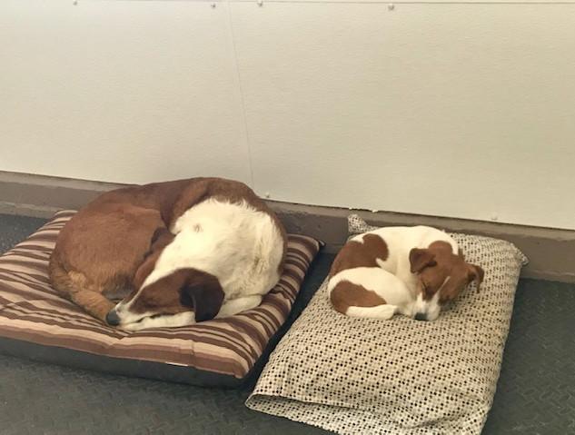 doggy daycare eddie and howard.jpg