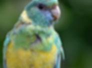Bird Boarding - Angelcare Pet Vet
