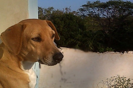 Street Dog Program Ek Balam Eco Hotel Yucatan