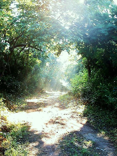 Nature Yucatan|Yucatan Jungle|Nature Walk Yucatan|Jungle Yucatan