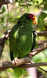 A parrot at Ek Balam