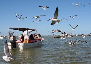 Rio Lagartos Biosphere Reserve|Mangroves Tour|Flamingo Boat Tour|Tour Rio Lagartos|