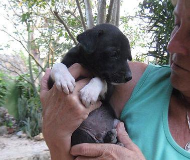 Animal Welfare Genesis Ek Balam Eco Hotel Yucatan