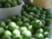 Organic Farm to Restaurant Ek Balam Eco Hotel Yucatan