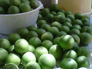 Farm to Restaurant|Vegetarian Yucatan|Yucatan Vegetarian|Yucatan Organic|Eco Hotel Yucatan|Mayan Agriculture||