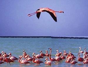 Flamingos Rio Lagartos Tour Genesis Ek Balam Eco Hotel Yucatan