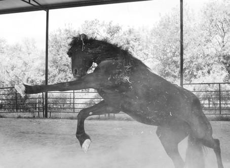 If Horses Could Talk