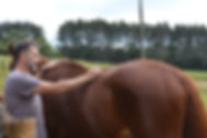 horse needle.jpg