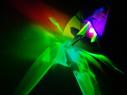 Light on Canvas By Laurent Fort (5)