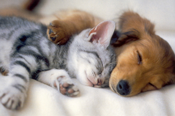 dog-and-cat-sleeping.png