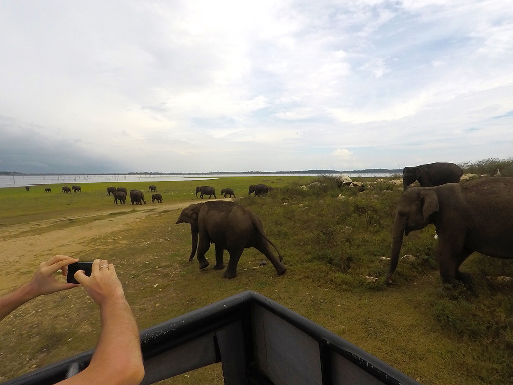 Kaudulla National Park, Sri Lanka