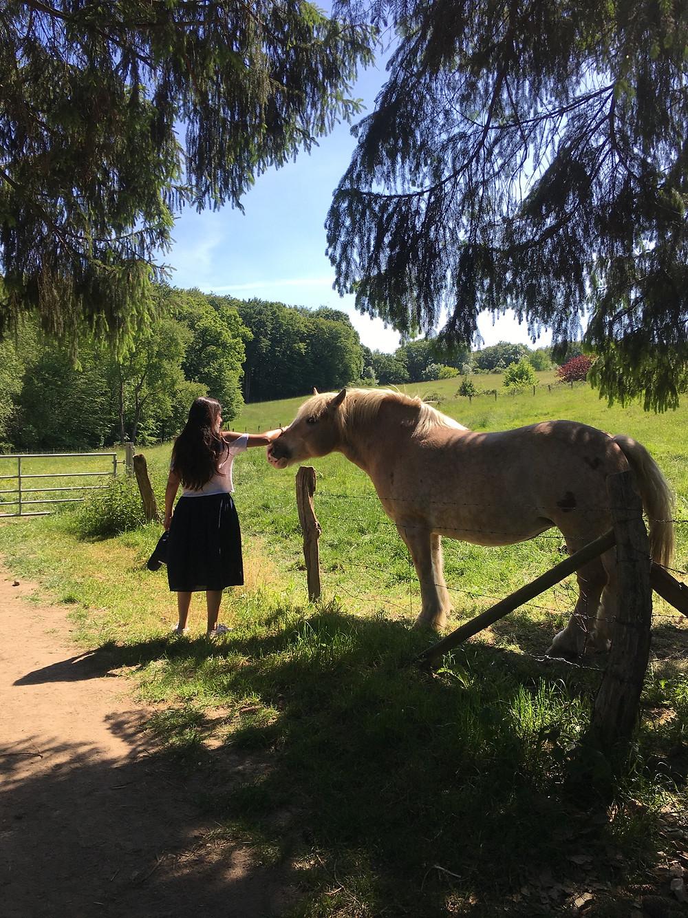 Horse on Pasture in Bergischer Weg