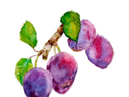 Pépin : La Prune, fruit de la fraternité.
